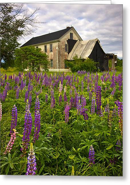Old Maine Houses Greeting Cards - Abandoned House Greeting Card by Benjamin Williamson
