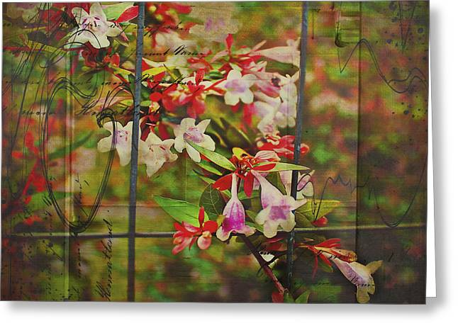 White Jewelry Greeting Cards - Abelia Coming Through Greeting Card by Bellesouth Studio