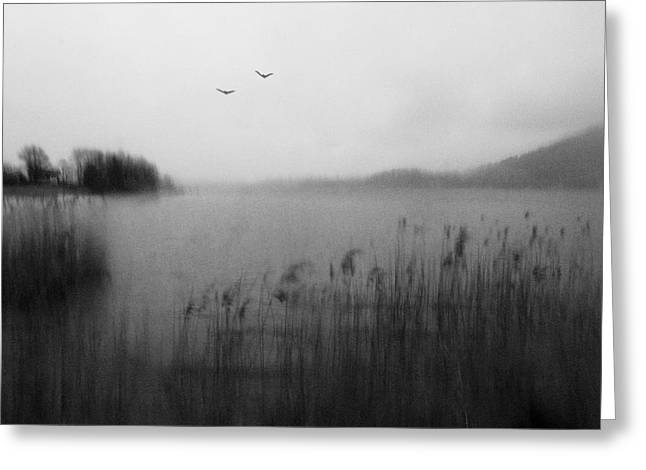 Water Birds Greeting Cards - About Isolation Ii Greeting Card by Christoph Hessel