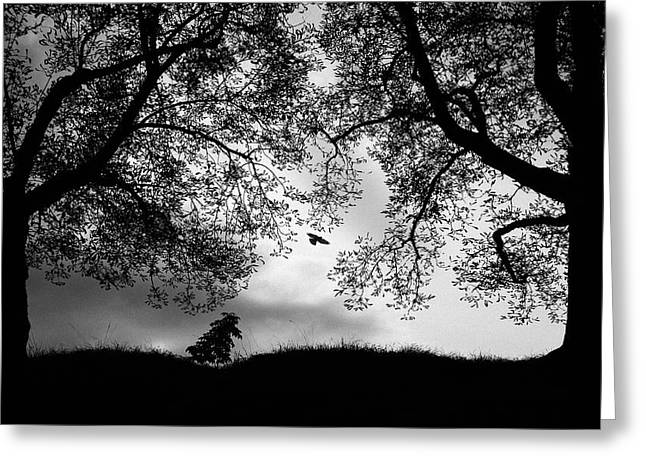 Blackandwhite Greeting Cards - About Isolation Vi Greeting Card by Christoph Hessel