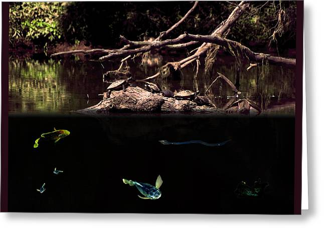 Duke Island Park Greeting Cards - Above and Below Greeting Card by Warren M Gray