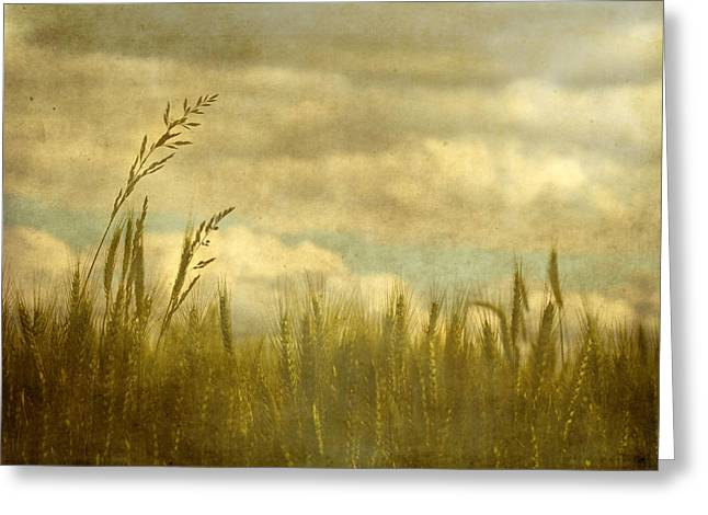 Summer Wheat Greeting Cards - Above It All Greeting Card by Rebecca Cozart