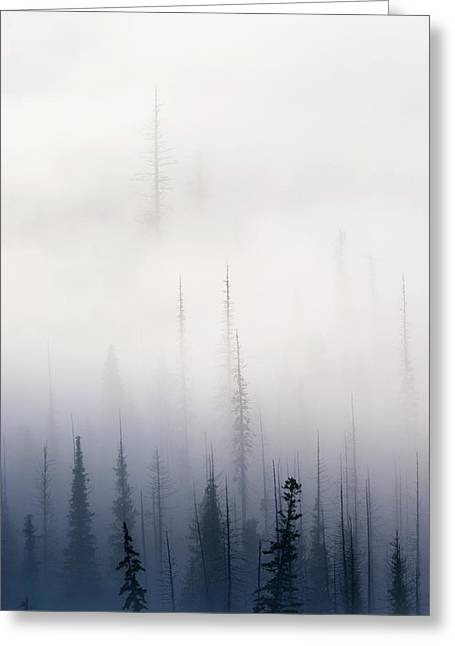 Pine-mist Greeting Cards - Above them All Greeting Card by Mike  Dawson