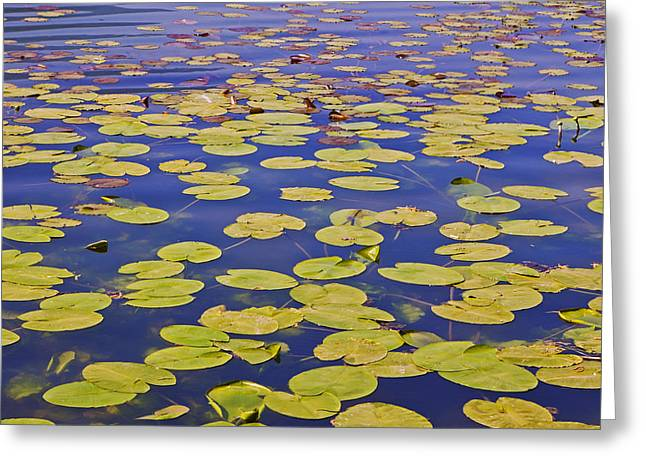 Lilly Pads Greeting Cards - Absolutly Idyllic Greeting Card by Joana Kruse