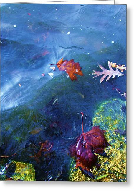 Abstract Water And Fall Leaves Greeting Cards - Abstract-10 Greeting Card by Todd Sherlock