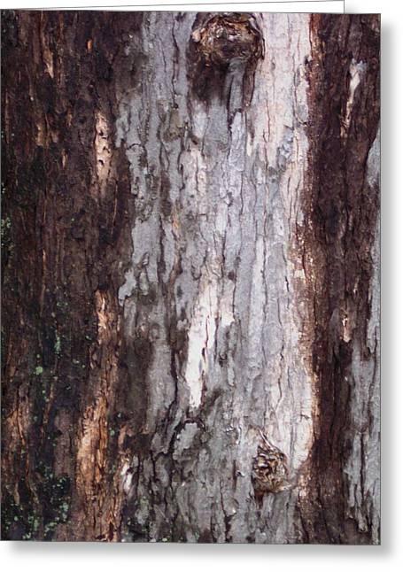 Anna Villarreal Garbis Greeting Cards - Abstract Bark 12 Greeting Card by Anna Villarreal Garbis