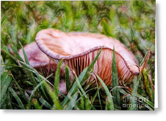 Close Focus Nature Scene Greeting Cards - Abstract fungus in grass Greeting Card by Wendy Townrow