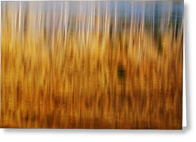 Quite Greeting Cards - Abstract image of trees reflecting in Little Redfish Lake Stanley Idaho USA Greeting Card by Vishwanath Bhat