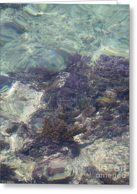 Snorkel Greeting Cards - Abstract in the Sea Greeting Card by Jessica Myscofski