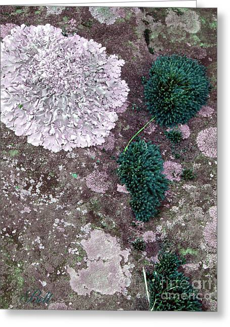 Alga Greeting Cards - Abstract Lichen Greeting Card by Christine Belt