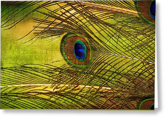 Popular Art Greeting Cards - Abstract Peacock Feathers  Greeting Card by Geraldine Scull