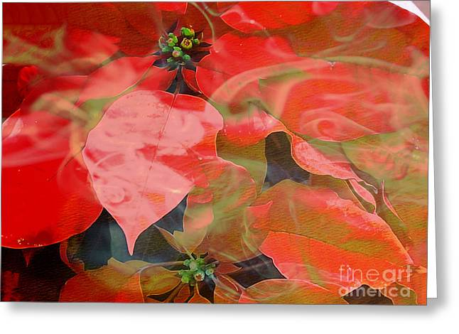 Abstract Poinsettia Greeting Card by Beverly Guilliams