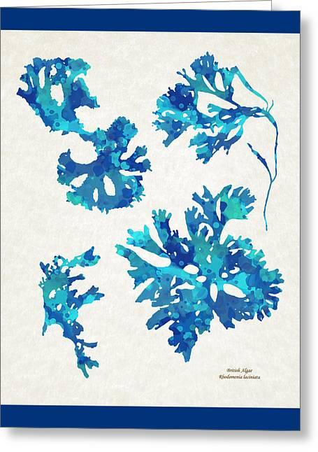 Abstract Seaweed Art Rhodomenia Laciniata Greeting Card by Christina Rollo