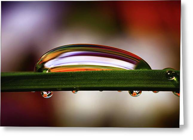 Nature's Abstract Greeting Card by Gary Yost