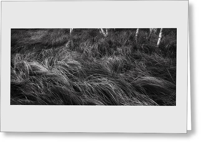 Dappled Light Greeting Cards - Abstract Waves of Grass - Sieur de Monts Woodlands   Greeting Card by Thomas Schoeller