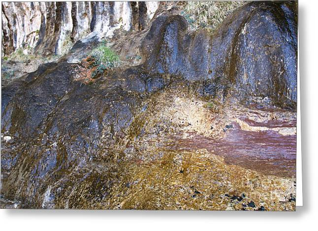 Weeping Greeting Cards - Abstraction in Color and Texture from Wet Rock Greeting Card by Karen Foley