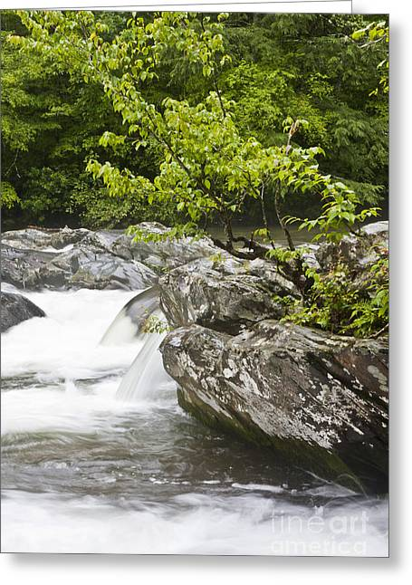 Tennessee River Greeting Cards - Abundance Greeting Card by Finesse Fine Art