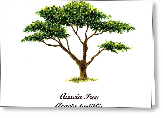 Acacia Tree Greeting Cards - Acacia Tree Number Two Greeting Card by Michael Vigliotti