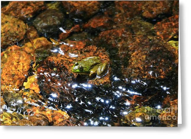 Acadia Amphibian  Greeting Card by Elizabeth Dow
