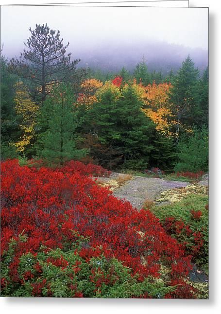 Acadia National Park Foliage Greeting Card by John Burk