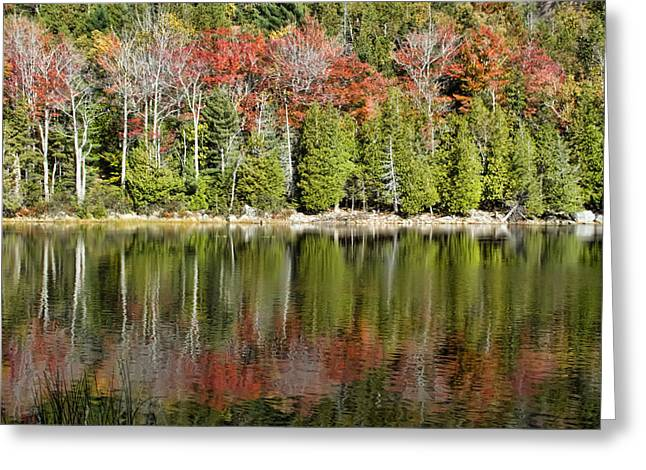 Maine Landscape Digital Greeting Cards - Acadia Tree Reflections Greeting Card by Alexander Mendoza