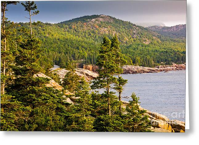 New England Wilderness Greeting Cards - Acadian Coast in Summer Greeting Card by Susan Cole Kelly