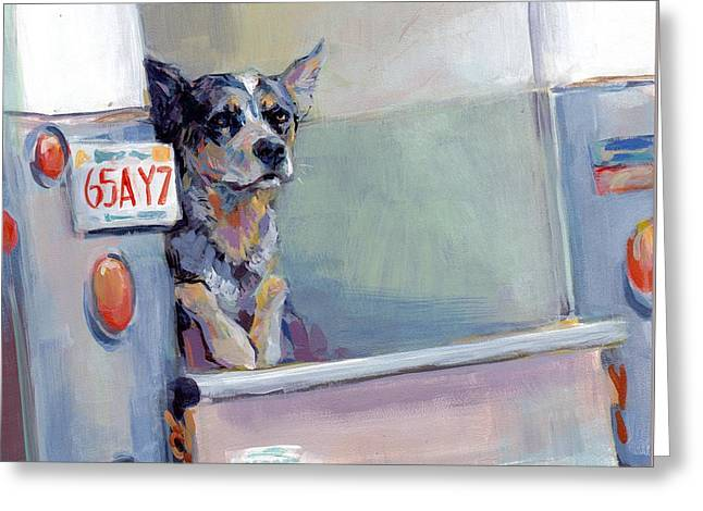 Herding Dogs Greeting Cards - ACD Delivery Boy Greeting Card by Kimberly Santini