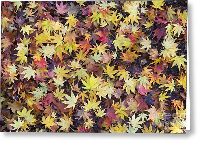 Acer Fall Greeting Card by Tim Gainey