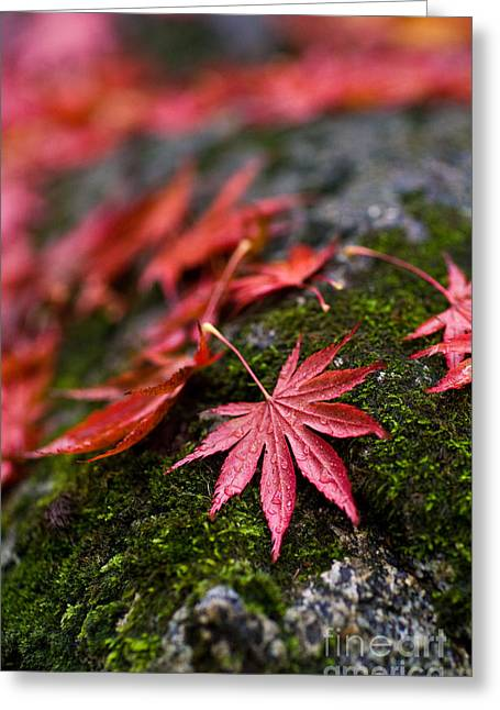 Acers Fallen Greeting Card by Mike Reid