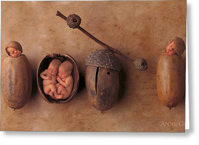 Twin Greeting Cards - Acorns Greeting Card by Anne Geddes