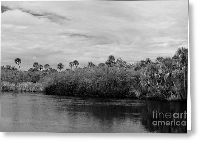 Mangrove Forest Greeting Cards - Across the River Greeting Card by Robert Wilder Jr