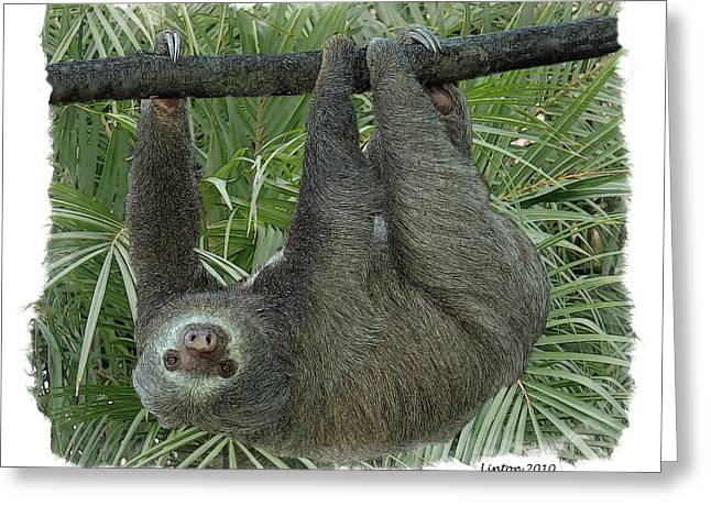 Three-toed Sloth Greeting Cards - Adagio Greeting Card by Larry Linton