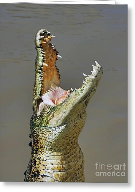 Feeding Greeting Cards - Adelaide River Crocodile Greeting Card by Bill  Robinson
