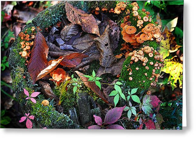 Adirondack Autumn Bouquet Greeting Card by Diane E Berry