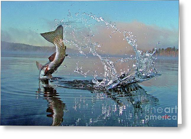 """rainbow Trout"" Greeting Cards - Adirondack Life Greeting Card by Brian Pelkey"