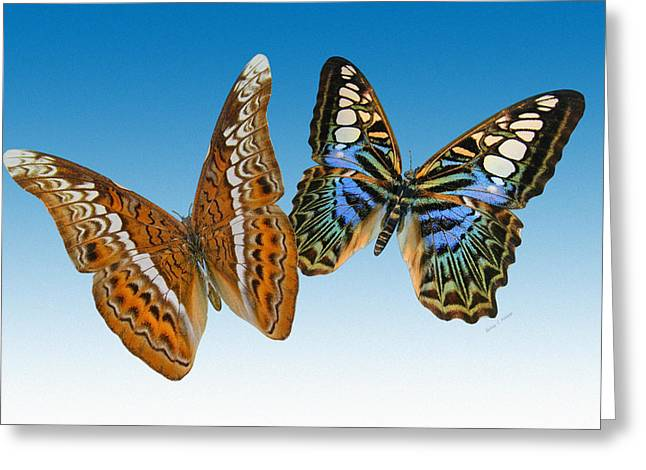 Admiral And Clipper Butterfly Greeting Card by Betsy C Knapp
