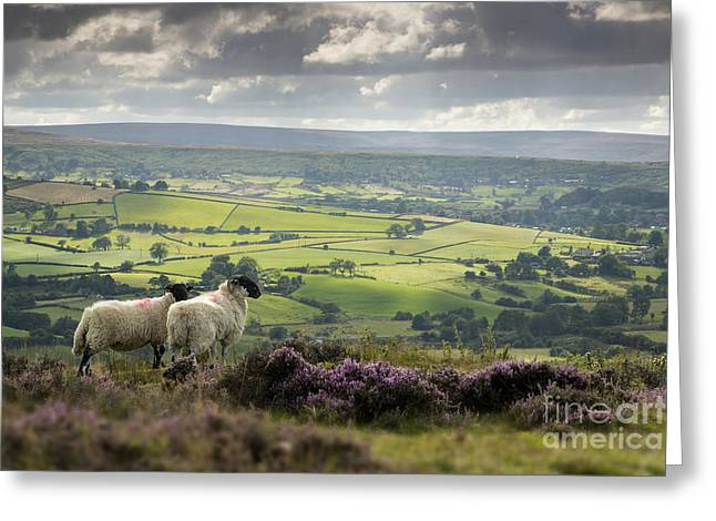 Midge Greeting Cards - Admiring The View Greeting Card by John Potter