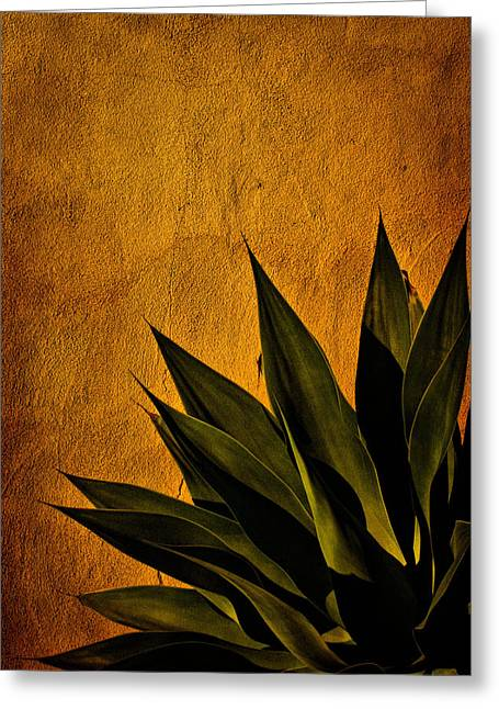 Adobe Digital Greeting Cards - Adobe and Agave at Sundown Greeting Card by Chris Lord