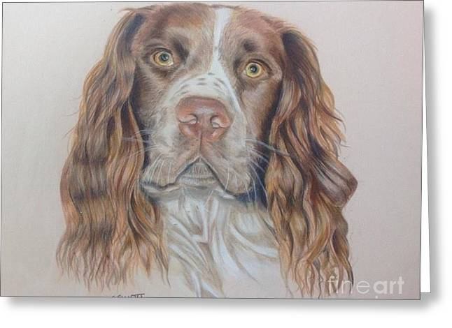Spaniel Drawings Greeting Cards - Adorable Arthur Greeting Card by Susan Elliott