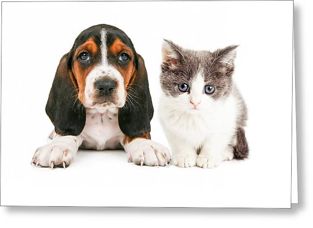Cute Kitten Greeting Cards - Adorable Basset Hound Puppy and Kitten Sitting Together Greeting Card by Susan  Schmitz