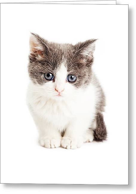 Cute Kitten Greeting Cards - Adorable Kitten Sitting Looking Forward Greeting Card by Susan  Schmitz