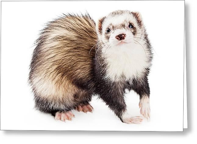 Adorable Pet Ferret Looking Into Camera Greeting Card by Susan Schmitz
