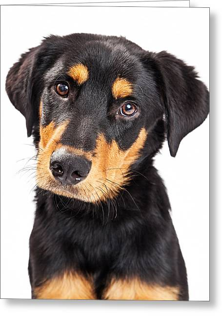 Mutt Greeting Cards - Adorable Rottweiler Crossbreed Puppy Close-up Greeting Card by Susan  Schmitz