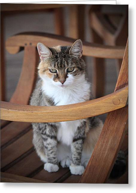 House Pet Greeting Cards - Adorable Tabby Cat Greeting Card by Cynthia Guinn
