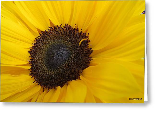 Yellow Sunflower Greeting Cards - Adoring Sun Greeting Card by B Vesseur