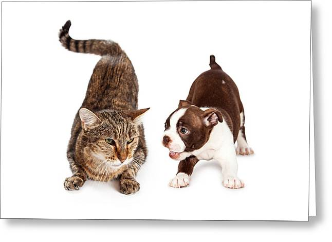 Defensive Greeting Cards - Adult Cat Annoyed With Playful Puppy Greeting Card by Susan  Schmitz
