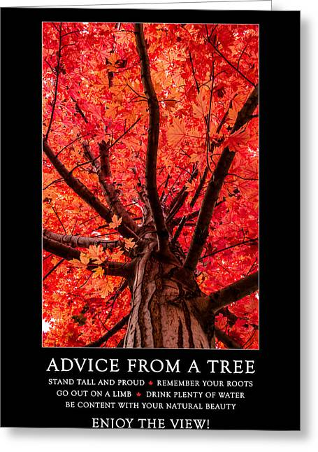Red Maple Tree Branches Greeting Cards - Advice from a Tree Greeting Card by Teri Virbickis