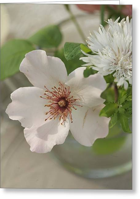 Bouquet Photographs Greeting Cards - Aerial Close-up Of White Flowers Greeting Card by Gillham Studios
