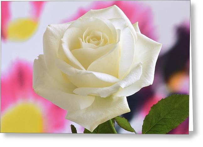 White Rose Wall Art Greeting Cards - Aesthetic Rose. Greeting Card by Terence Davis