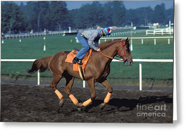 Affirm Photographs Greeting Cards - Affirmed - Triple Crown Winner Greeting Card by Marc Bittan